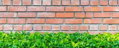 Кирпичная стена и зеленое растение Стоковое Изображение