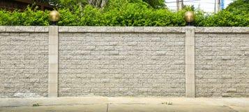 Кирпичная стена и зеленые лист стоковые изображения