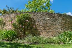 Кирпичная стена и розы стоковая фотография rf