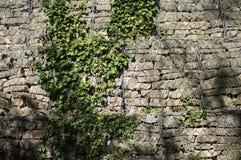 Кирпичная стена с предпосылкой завода Стоковые Изображения
