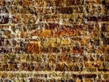 Кирпичная стена с пропускать воды стоковые изображения
