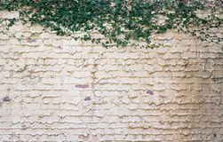 Кирпичная стена Backgroun Стоковая Фотография