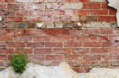 Стена кирпича и штукатурки Стоковая Фотография