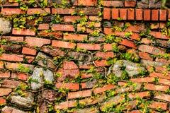 Кирпич и каменная стена с плющом Стоковые Фото