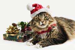 Киска времени рождества хелпер Санты Стоковые Изображения RF
