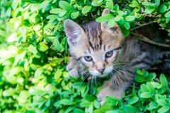Киска в изгороди Стоковая Фотография