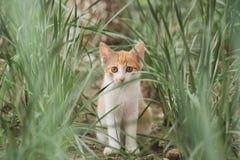 Киска в траве стоковое фото rf