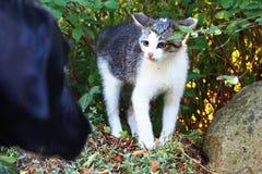 Киска испуганная собаки Стоковая Фотография RF