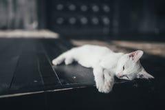 Киска кота меньшая мягкая белая предпосылка внутрь стоковые фотографии rf