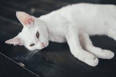 Киска кота меньшая мягкая белая предпосылка внутрь стоковое изображение rf