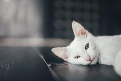 Киска кота меньшая мягкая белая предпосылка внутрь стоковые изображения rf
