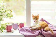 Киска на windowsill, чашки горячего какао Стоковое фото RF
