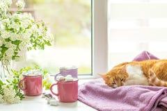 Киска на windowsill, чашки горячего какао Стоковые Изображения