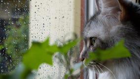 Киска, дождь и окно Стоковая Фотография