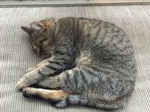 Киска спать Стоковая Фотография RF