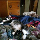 Киска спать Luvs Стоковые Фото