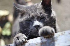 киска Стоковая Фотография RF