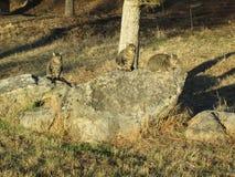 Киски горы Стоковая Фотография