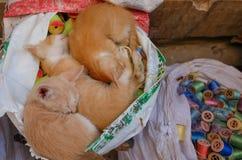 Киски спать мирно в мешке в ` s Medina Fes Стоковые Фотографии RF