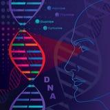 кисловочное дизоксирибонуклеиновое исследование Стоковое Изображение RF