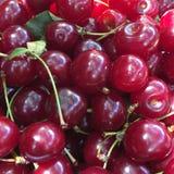 Кислые вишни Стоковое Изображение RF