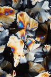 кисловочные лимонные цветастые кристаллы стоковая фотография rf