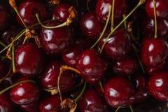 Кислые вишни, конец-вверх Стоковое фото RF