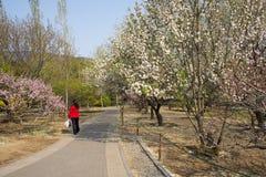 Китаец Азии, сад Пекина ботанический, пейзаж весны Стоковые Изображения