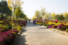 Китаец Азия, Пекин, олимпийский Forest Park, море цветков, Стоковые Фотографии RF