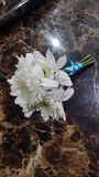 Китаец Chrysanrhemum Стоковые Изображения RF