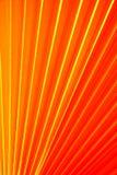 Китайская ладонь вентилятора Стоковое Изображение