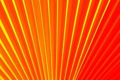 Китайская ладонь вентилятора Стоковая Фотография RF
