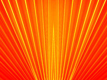 Китайская ладонь вентилятора Стоковая Фотография