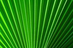 Китайская ладонь вентилятора Стоковое фото RF