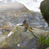 китайская вода дракона Стоковое Фото