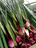 китайская кухня приправляет весну луков материалов имбиря чеснока важную Стоковая Фотография RF