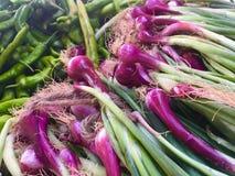 китайская кухня приправляет весну луков материалов имбиря чеснока важную Стоковое Фото
