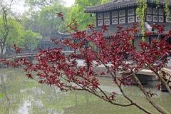 Китайская пагода, красивые деревья клена в осени, листва Стоковая Фотография