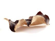 китайские высушенные грибки Стоковая Фотография RF