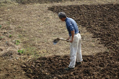 Китайские крестьяне пашут поле Стоковая Фотография