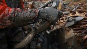 Китайские люди выкапывают вне корни лотоса это высокий овощ выхода который растет глубоко в иле yunnan Китай стоковая фотография rf