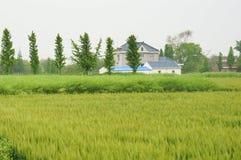 Китайские дома в деревне и сельскохозяйственное угодье Стоковые Фото