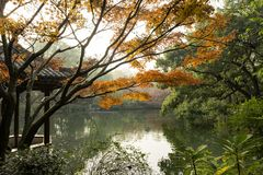 Китайские пагода и озеро осени Стоковая Фотография RF