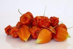 китайские семена фонарика Стоковые Фото