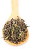 Китайский зеленый чай стоковые изображения