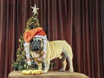 Китайский канун Нового Годаа с желтой собакой земли Стоковые Изображения