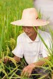 Китайский крестьянин Стоковое фото RF