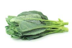 китайский овощ kale Стоковые Изображения RF