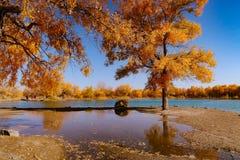 китайский пейзаж Стоковое фото RF