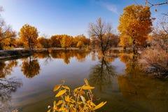 китайский пейзаж Стоковые Фотографии RF